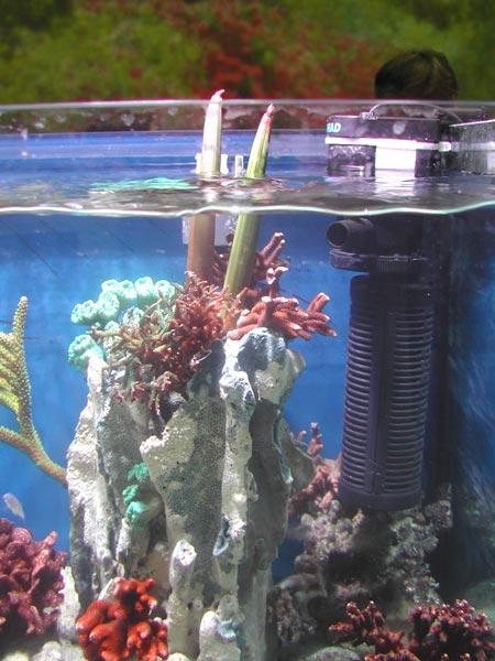 nitrat aquarium zu wenig