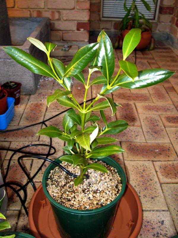 hydroponic welche pflanzen