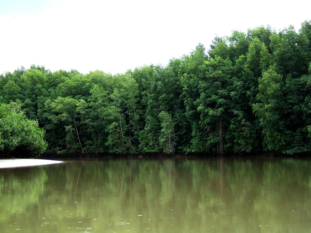 riverine mangrove forests costa rica