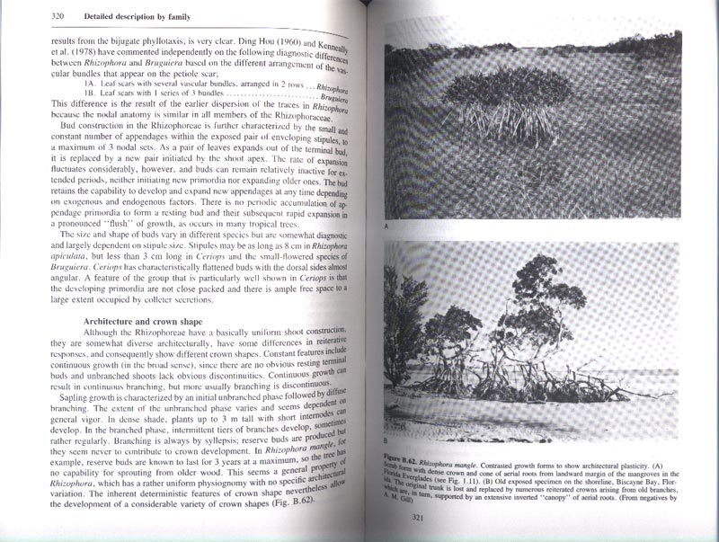 The Botany of Mangroves - aus dem Buch