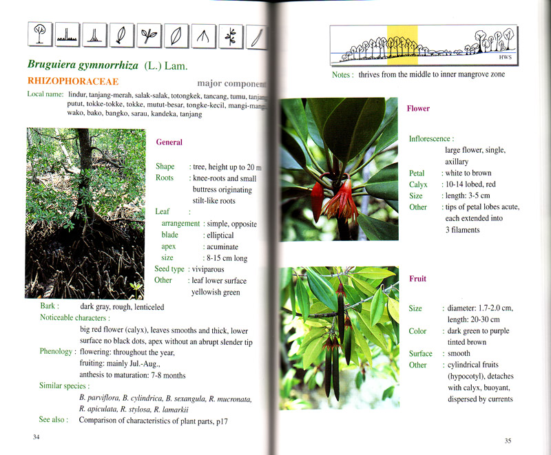 Handbook of Mangroves in Indonesia - aus dem Buch