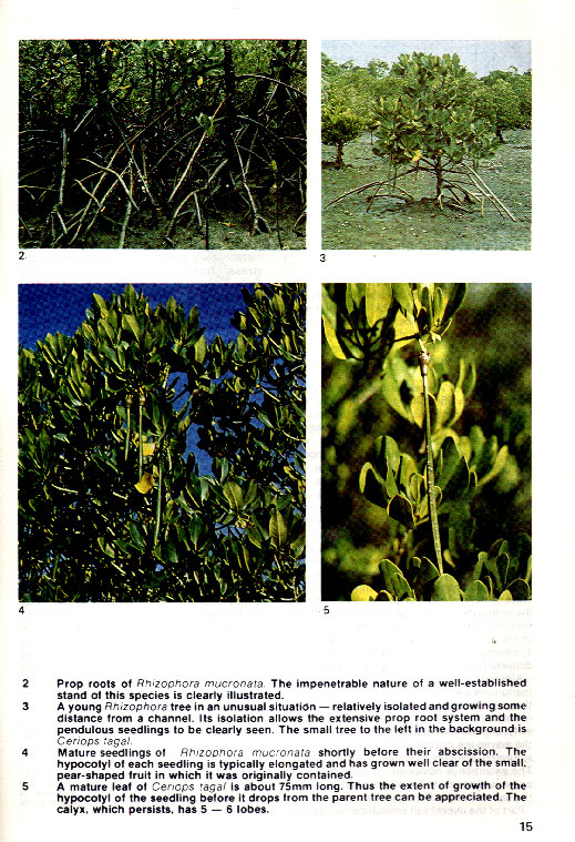 In the Mangroves of Southern Africa - aus dem Buch