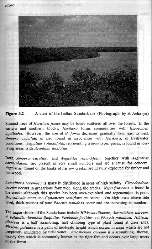 Mangroves of the Sundarbans - Volume I - aus dem Buch