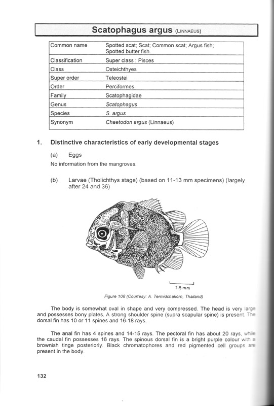 Manual of fish eggs and larvae from Asian mangrove waters - aus dem Buch