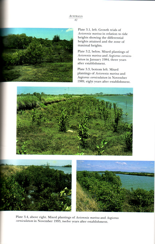 Restoration of Mangrove Ecosystems - aus dem Buch