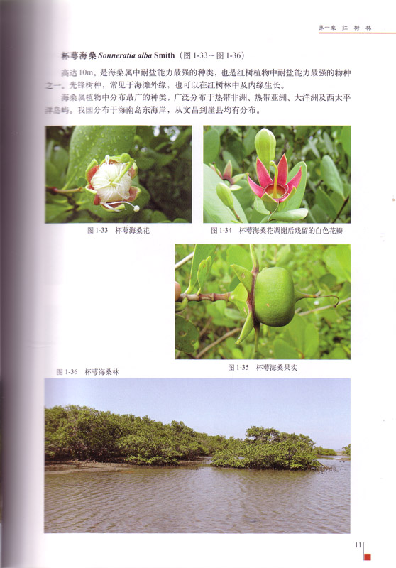 The Mangroves of China - aus dem Buch
